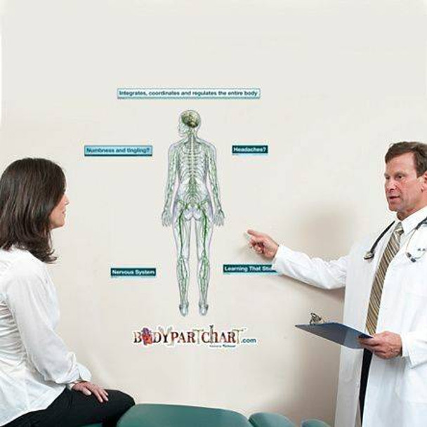 Posterior Nervous System Anatomy Dry-Erase Sticky Wall Chart