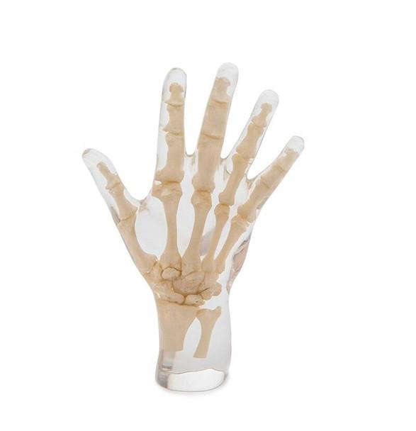 X-Ray Phantom Hand, Transparent