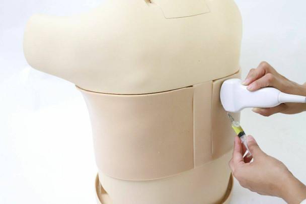 Anatomy Lab Thoracentesis Ultrasound Training Model