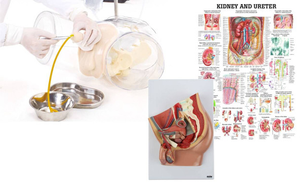 Male Catheter Transparent Trainer and Urinary System Kit