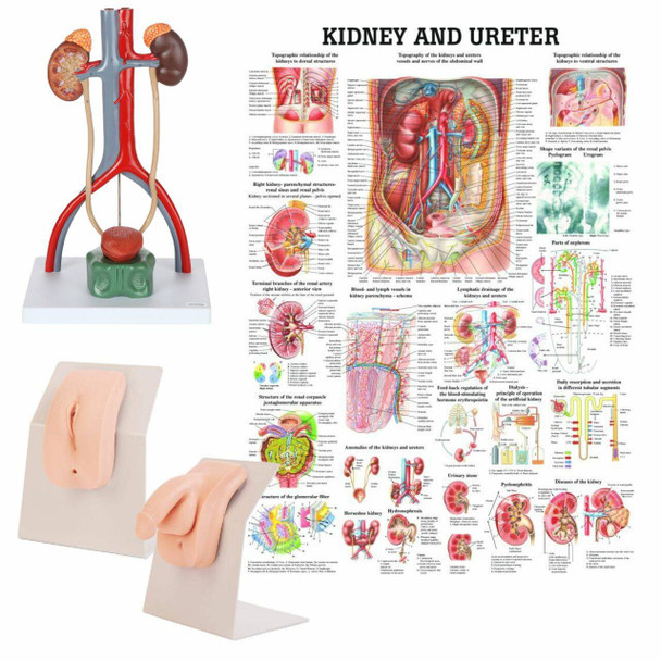 Portable Dual Sex Catheter Trainer and Urinary System Kit
