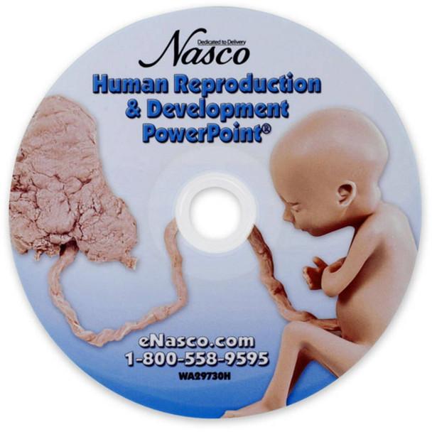 Fetal Development PowerPoint