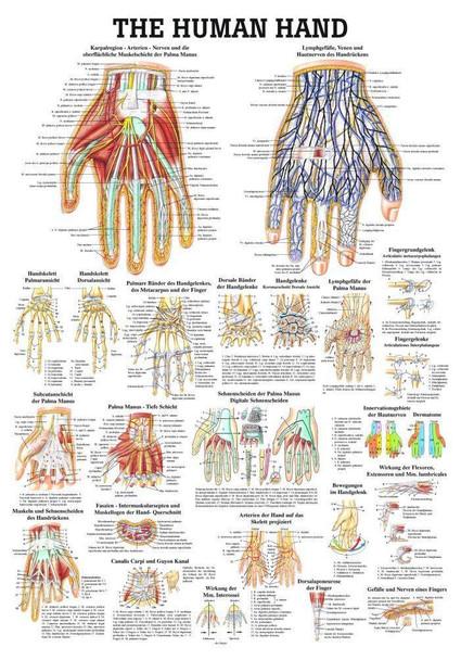 Healthy and Diseased Hand Laminated Anatomy Chart