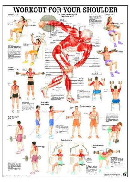 Workout For Your Shoulders Laminated Fitness Poster