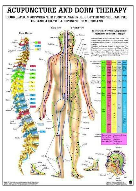 Meridian and Dorn Therapy Laminated Poster