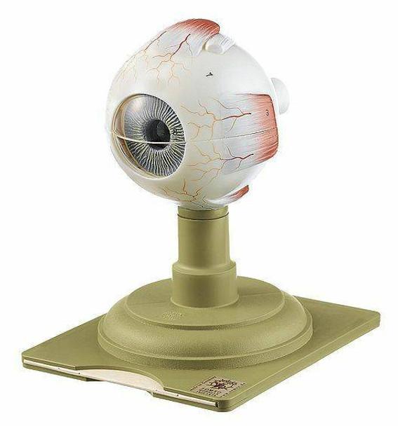 SOMSO Eyeball