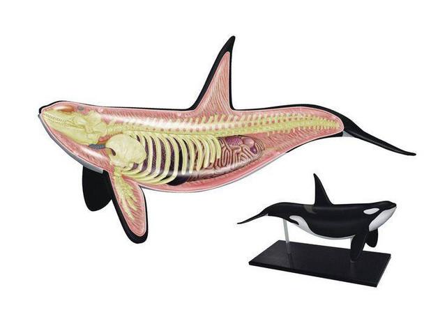 4D Orca Whale Anatomy Puzzle