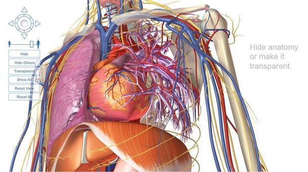 Visible Body Human Anatomy Software PC or Mac Download