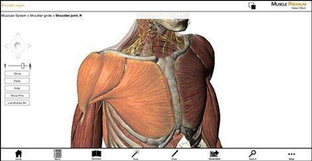 Visible Body Human Muscle Premium Software PC or Mac Download