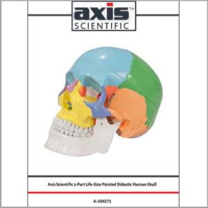 Axis Scientific 3-Part Life-Size Didactic Human Skull Anatomy Model Study Guide Booklet and Manual