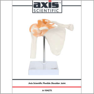 Axis Scientific Life-Size 22-Part Osteopathic and Didactic Human Skull Anatomy Model Study Guide Booklet and Manual