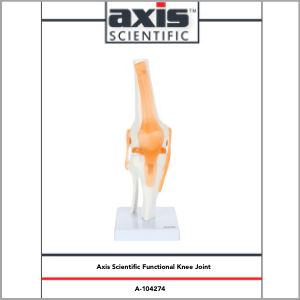 Axis Scientific Human Knee Joint with Functional Ligaments Anatomy Model Study Guide Booklet and Manual