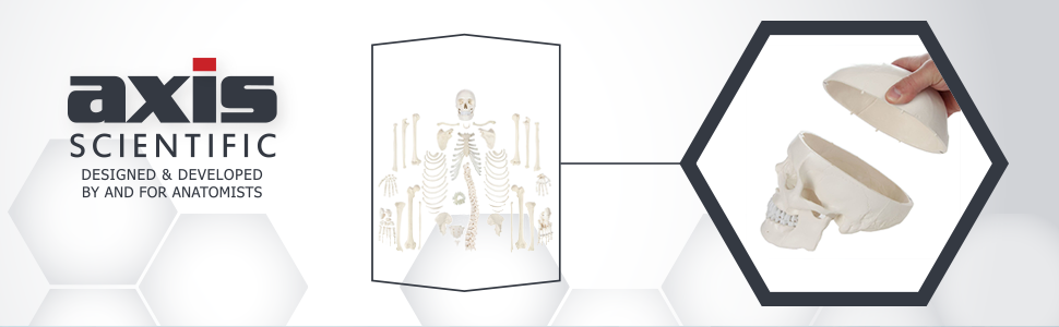 Axis Scientific Complete Disarticulated Life-Size Human Skeleton with 3-Part Skull Model and Detailed Study Booklet