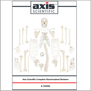 Axis Scientific Disarticulated Life-Size Human Skeleton with 3-Part Skull Anatomy Model Study Guide Booklet and Manual