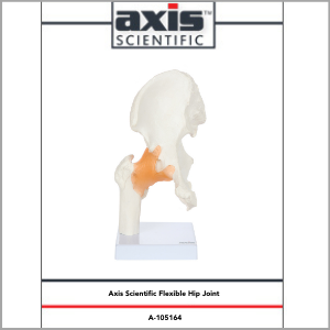 Axis Scientific Human Hip Joint with Functional Ligaments Anatomy Model Study Guide Booklet and Manual.