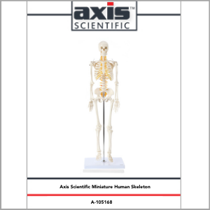 Axis Scientific Miniature Human Skeleton Anatomy Model Study Guide Booklet and Manual.