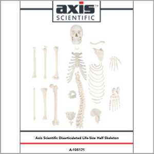 Axis Scientific Disarticulated Half Human Skeleton Anatomy Model Study Guide Booklet and Manual.