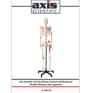 Axis Scientific Painted and Numbered Flexible Life-Size Human Skeleton Anatomy Model Study Guide Booklet and Manual.