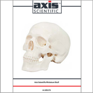 Axis Scientific 3-Part Miniature Human Skull Anatomy Model Study Guide Booklet and Manual