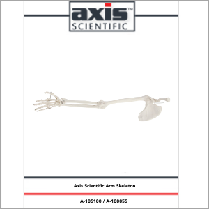 Axis Scientific Life-Size Human Arm Skeleton with Clavicle, Scapula, and Articulated Hand Anatomy Model Study Guide Booklet and Manual.