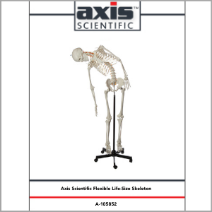 Axis Scientific Flexible Life-Size Human Skeleton Anatomy Model Study Guide Booklet and Manual.