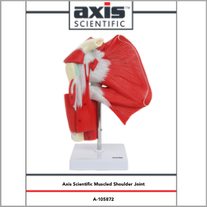 Axis Scientific Numbered Human Shoulder Joint with Muscles Anatomy Model Study Guide Booklet and Manual.
