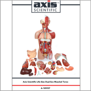 Axis Scientific Life-Size Dual-Sex 28-Part Muscled Human Torso Anatomy Model Study Guide Booklet and Manual.