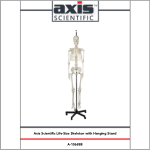 Axis Scientific Classic Life-Size Human Skeleton Anatomy Model Study Guide Booklet and Manual