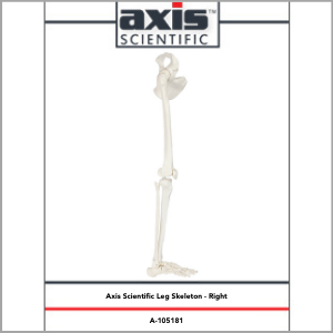 Axis Scientific Life-Size Human Leg Skeleton with Hip Joint and Articulated Foot Anatomy Model Study Guide Booklet and Manual