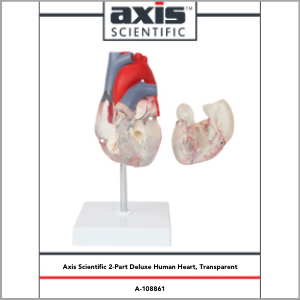 Axis Scientific Deluxe Life-Size 2-Part Transparent Human Heart Anatomy Model Study Guide Booklet and Manual.