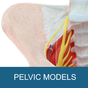 PELVIC MODELS