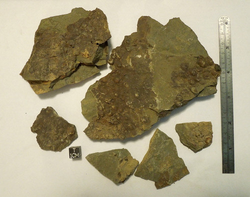 Fossil Matrix Lot, Devonian, Mahantango Formation