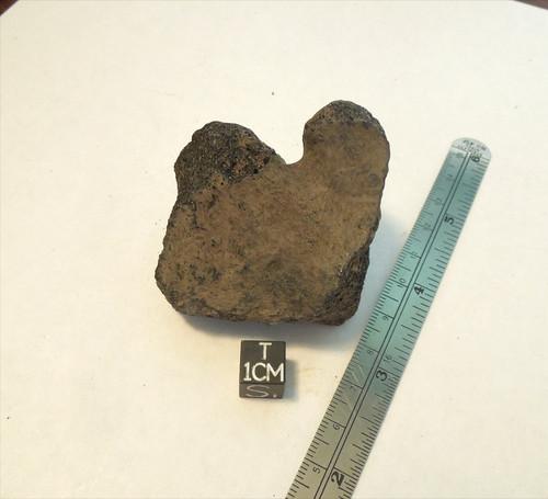 Fossil Horse Magnum Bone (Equus sp.), Bone Valley, Pleistocene