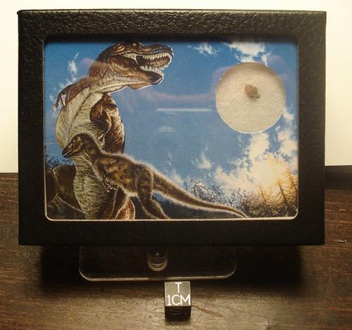 Chicxulub KT Boundary Display, Rare Dinosaur Extinction Relic