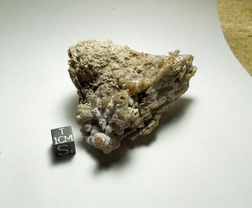 Florida Agatized Chalcedony Limestone, Miocene