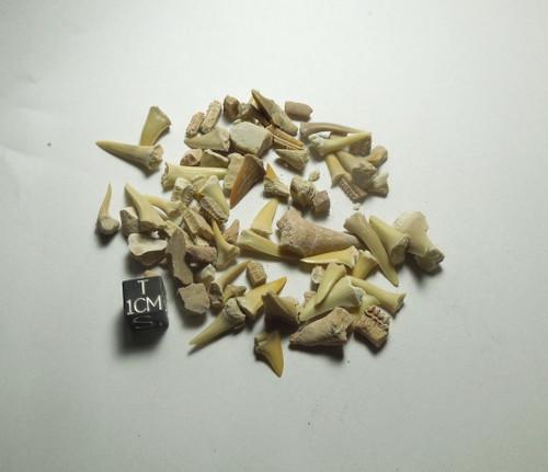 Kem Kem Morocco Fossil Lot, Shark and Rays, Cretaceous