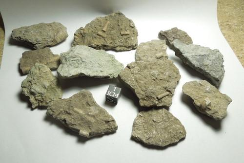 Mini Fossil Hash Plate, Crinoids, Devonian