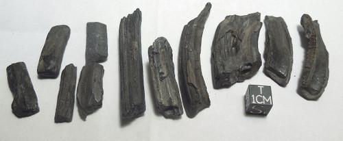 Fossil Mammal Teeth Lot, Horse, Camel, Deer, Pleistocene