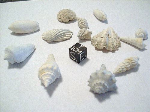 Fossil Shell Assortment Lot, Extinct Species, Millions of Years Old