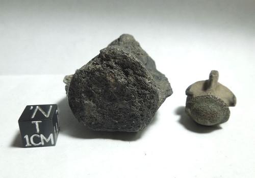 Fossil Vertebra Lot of Two, Peace River, Pleistocene