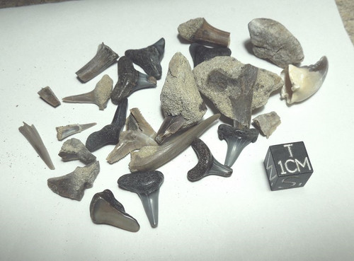 Mixed Shark Teeth Lot, Some with Matrix, Cretaceous to Miocene