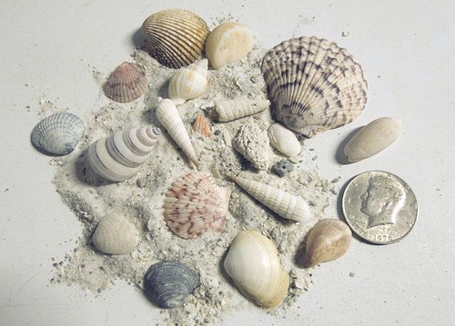 Beach in a Bag, Florida Gulf White Sugar Sand, Shells, Coral, More!