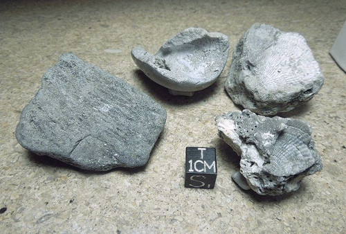 Trace Fossil Lot, Four Pieces from Miocene and Pleistocene