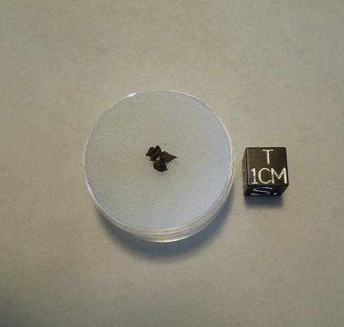 Pallasovka, Russian Pallasite Meteorite, Micromount