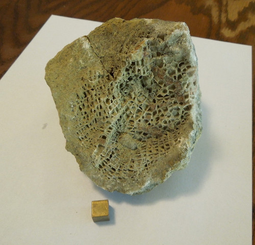 Foerstephyllum Vacuum Fossil Coral, 400+ Million Years, Large Block