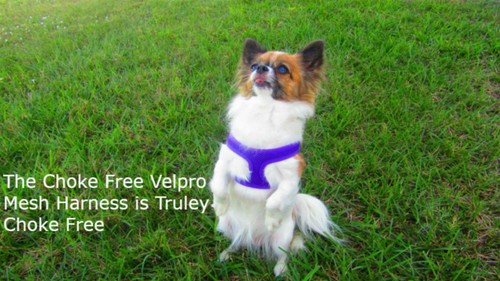 Number #1 Choke Free Velpro Mesh Dog harness that really never chokes your pet. No more gagging or chocking noise when you walk your pet. Free Shipping.