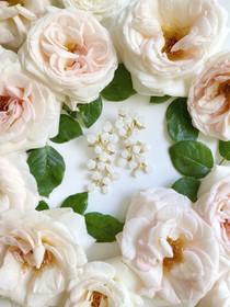 English Garden Rose Earrings