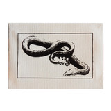 Yellow Bellied Snake Canvas Print