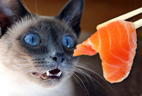 jiu-rf-photo-of-cat-eying-salmon-sushi.jpg