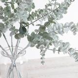 Frosted Eucalyptus Stem [MUSLFROSTE19]
